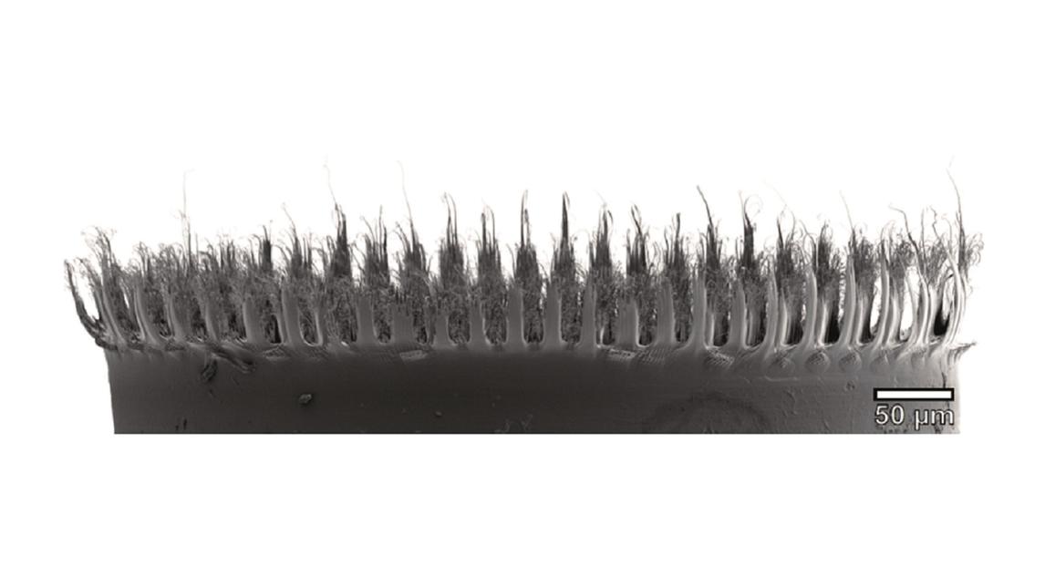Logo Nanopelz trennt Öl von Wasser