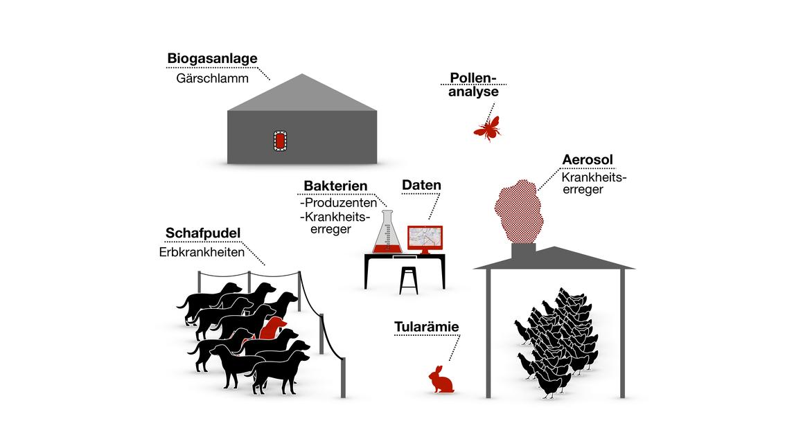 Logo  Analyse und Optimierung biolog. Systeme