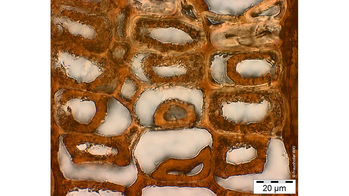 Logo Lichtmikroskopie in der Holzforschung