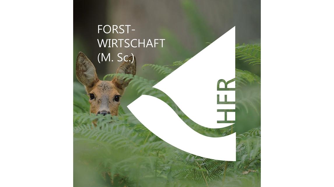 Logo Forstwirtschaft (M. Sc.)