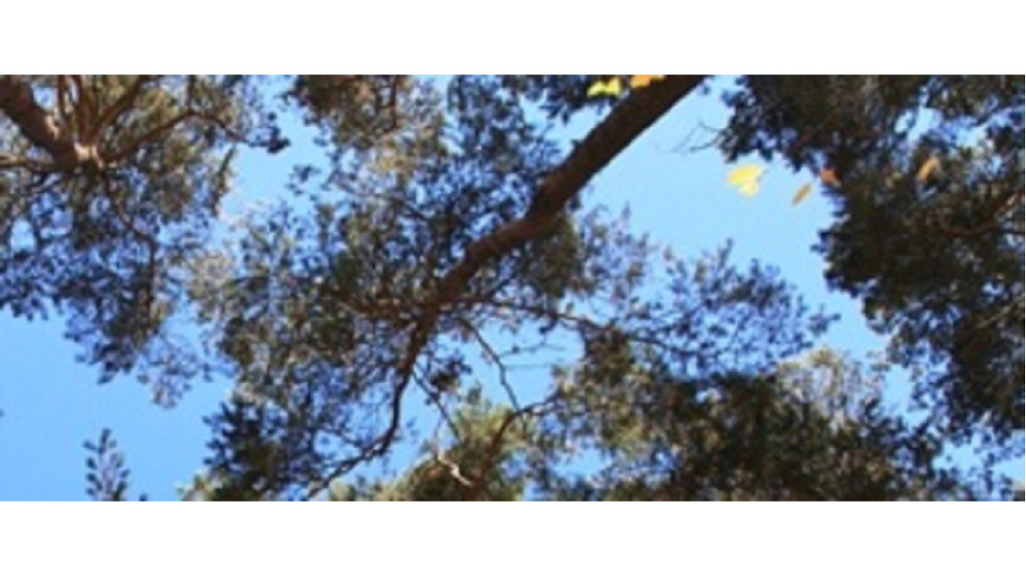 Logo PEFC-Waldzertifizierung