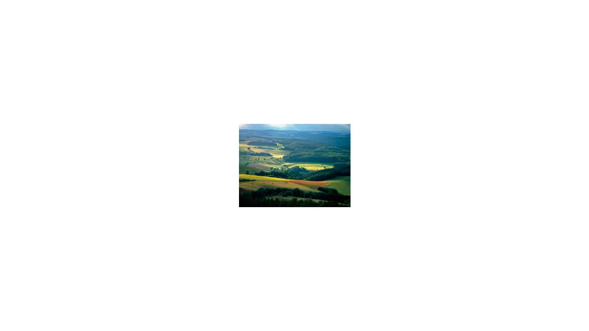 Logo Holz und Wald